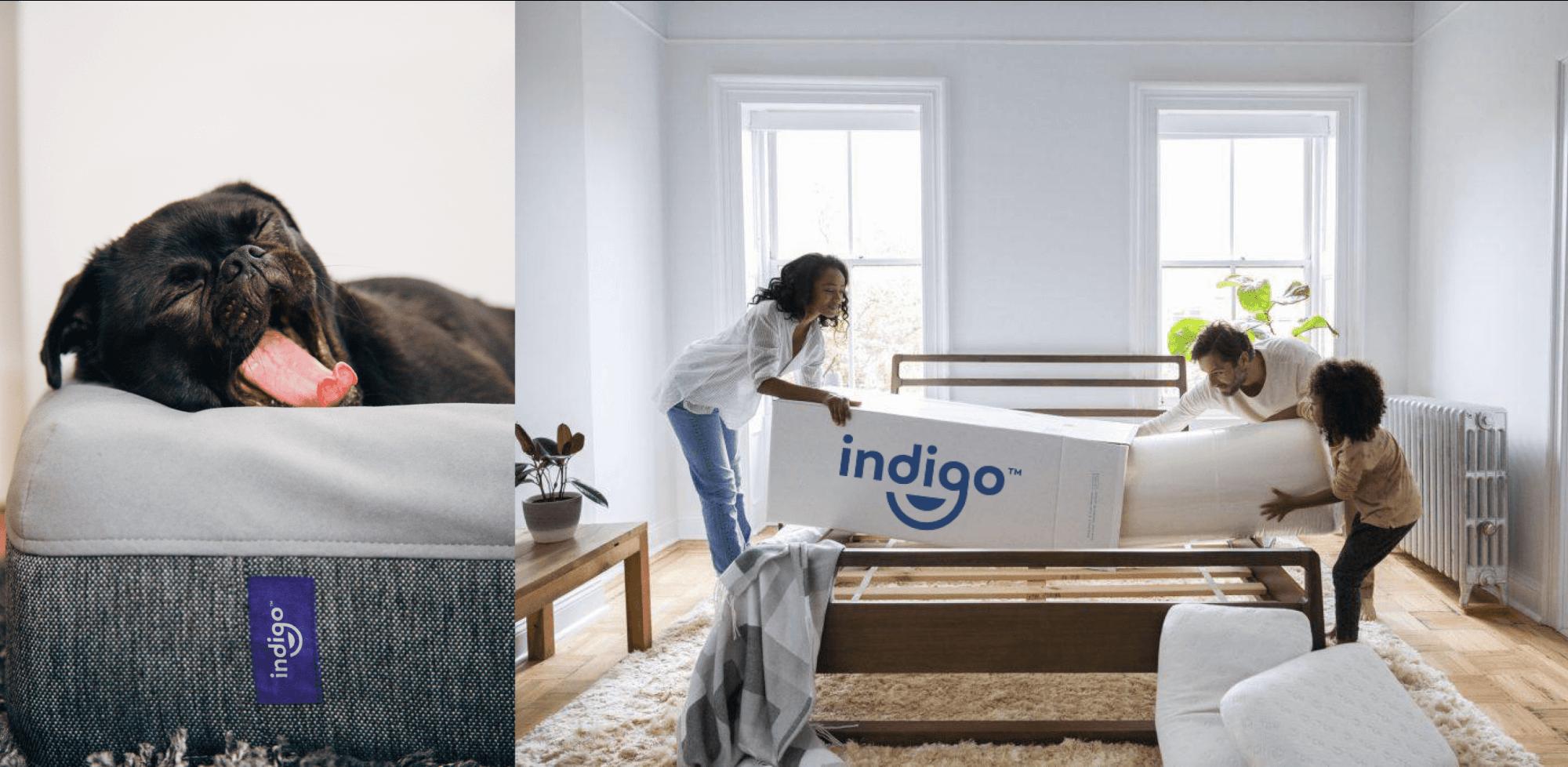 indigo bg dog and mattress